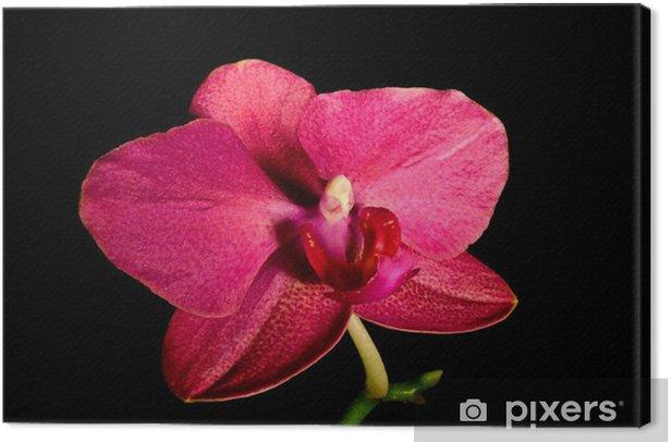 Obraz na płótnie Orchidea - Kwiaty