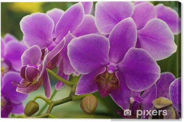 Obraz na płótnie Orchidea - Tematy