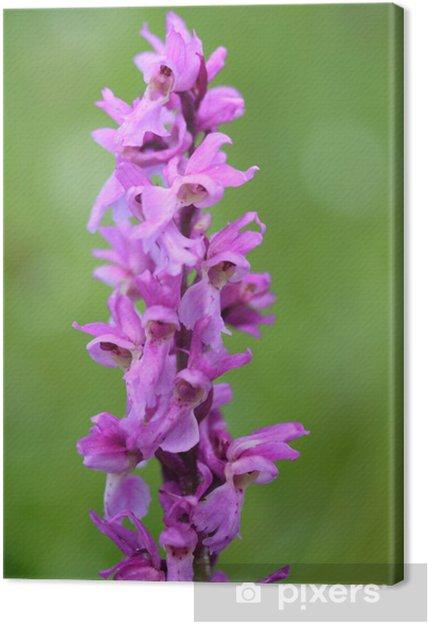 Obraz na płótnie Orchidea - Rośliny