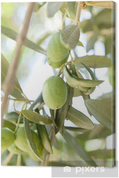 Obraz na płótnie Organiczne Zielone Oliwki na drzewa oliwnego - Oliwki