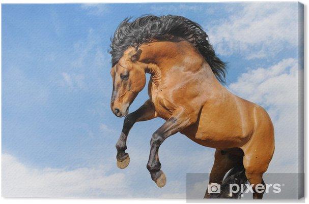 Obraz na płótnie Osadzeni konia na białym tle - Ssaki