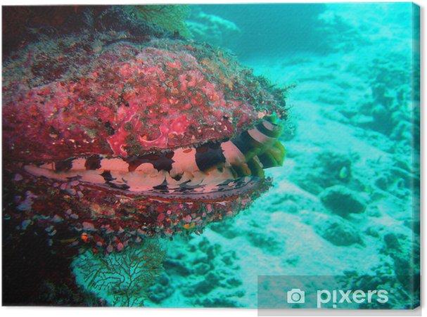 Obraz na płótnie Ostryga tłuszczu - Zwierzęta żyjące pod wodą