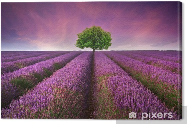 Obraz na płótnie Oszałamiający krajobraz lato lawendowego pola z jednego drzewa słońca -