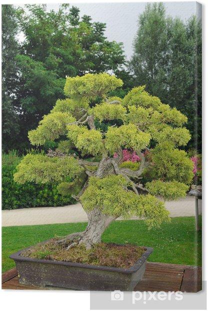Obraz na płótnie Outdoor bonsai sosna - Dom i ogród
