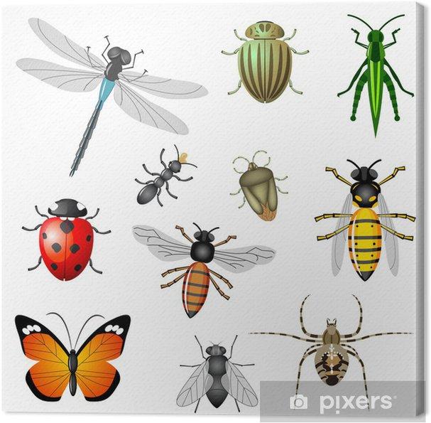 Obraz na płótnie Owady lub robaki, kolekcja wektor - Inne Inne