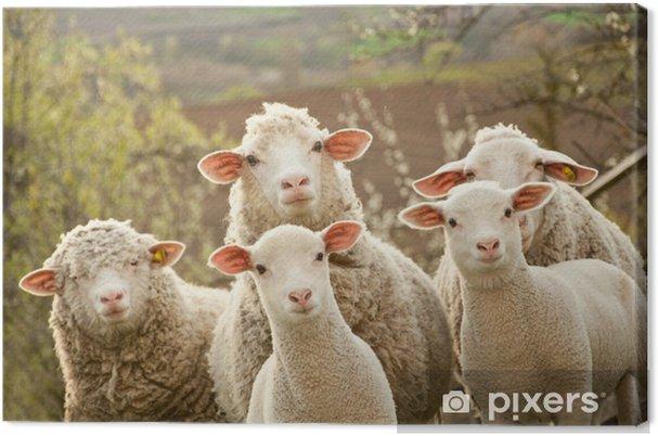 Obraz na płótnie Owce na pastwisku - iStaging