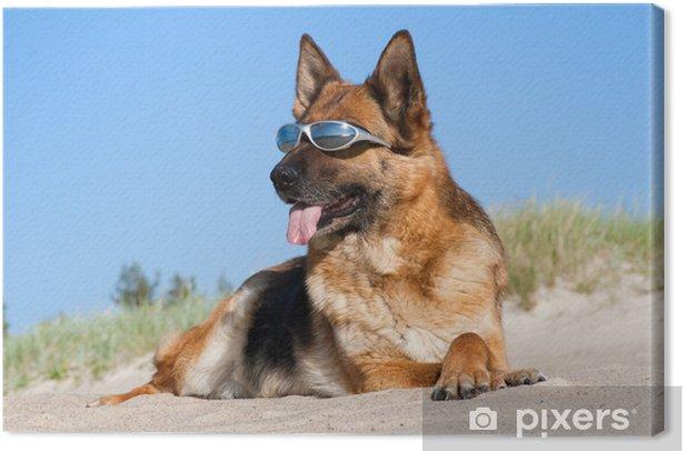 Obraz na płótnie Owczarek niemiecki r. w okulary na piasku - Ssaki