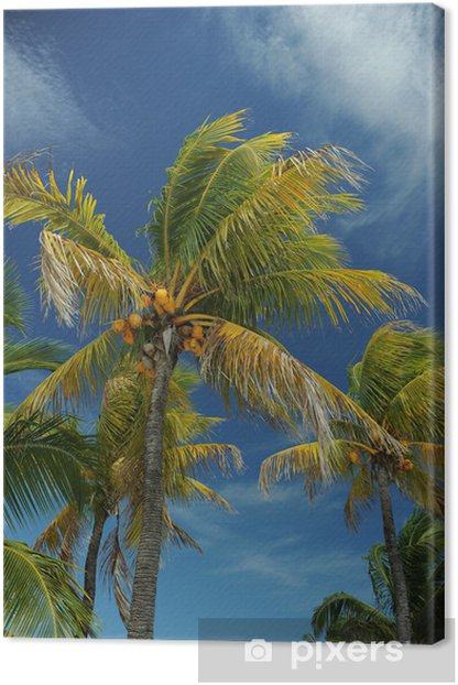 Obraz na płótnie Palmy kokosowe na pustej tropikalnej plaży Bahamów - Palmy
