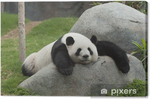 Obraz na płótnie Panda bear spanie - Pandy