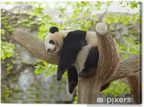 Obraz na płótnie Panda dziecko śpi - Tematy