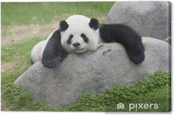 Obraz na płótnie Panda - Tematy