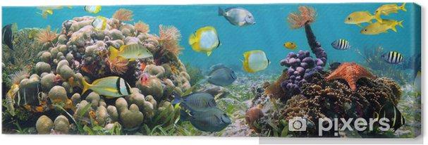 Obraz na płótnie Panoramiczny koralowa - Rafa koralowa