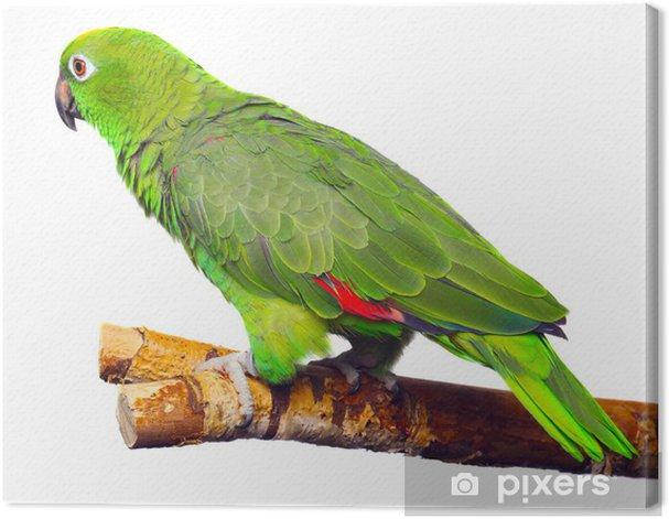Obraz na płótnie Papuga Amazon - Naklejki na ścianę