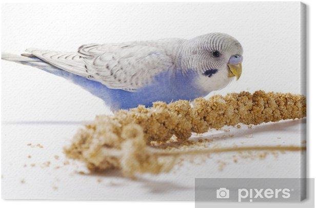 Obraz na płótnie Papuga długoogonowa - Naklejki na ścianę