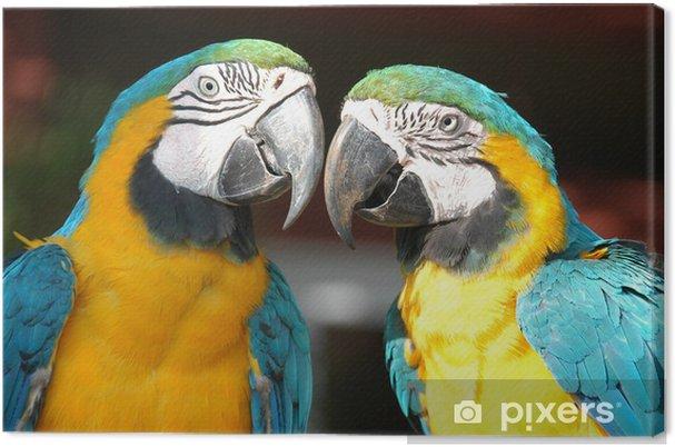 Obraz na płótnie Papugi - Tematy