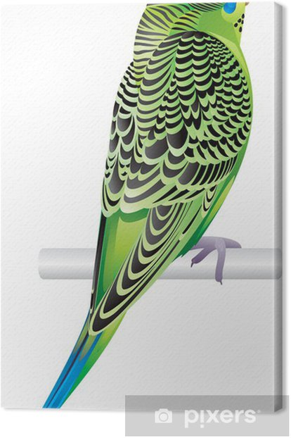 Obraz na płótnie Papużka falista - Ptaki