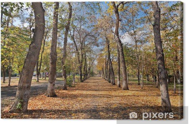 Obraz na płótnie Park jesienia - Rośliny