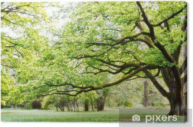 Obraz na płótnie Park - Drzewa