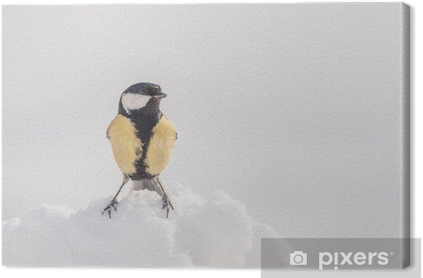 Obraz na płótnie Parus - Ptaki