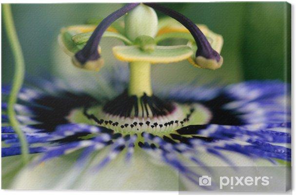 Obraz na płótnie Passion fruit kwiat 4 - Kwiaty