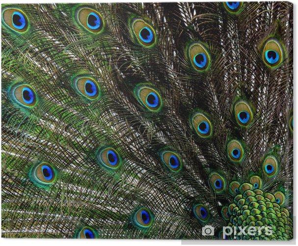 Obraz na płótnie Paw tle - Ptaki