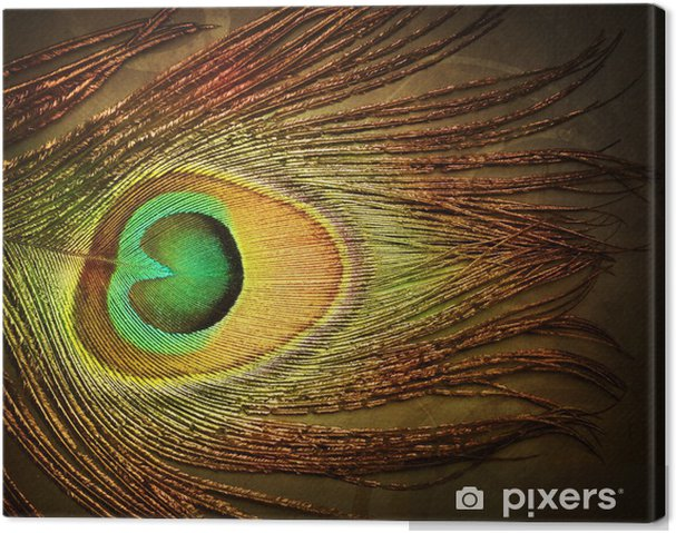 Obraz na płótnie Pawie pióro - Tła