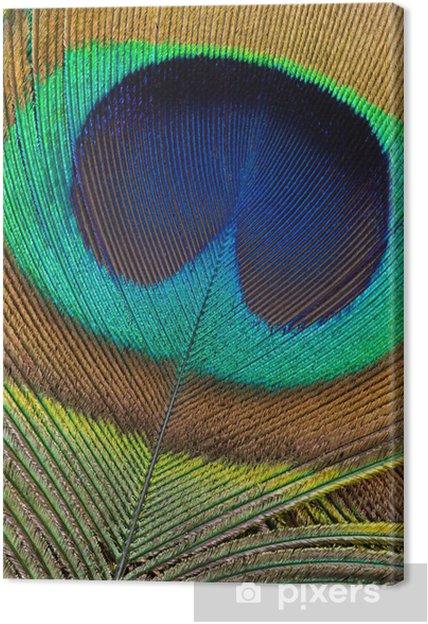 Obraz na płótnie Pawim piórem szczegóły - Ptaki