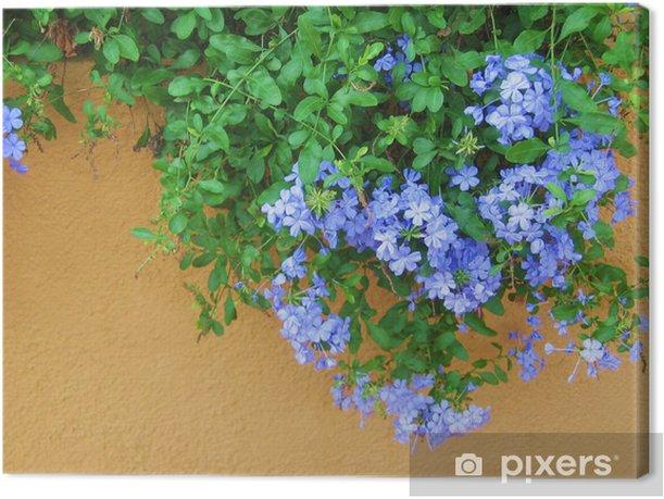 Obraz na płótnie Pelargonie wiszące - Kwiaty