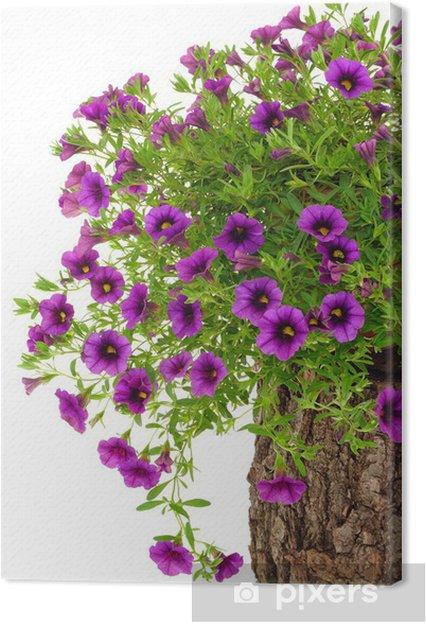 Obraz na płótnie Petunia, kwiaty Surfinia na pniu drzewa na białym tle - Kwiaty