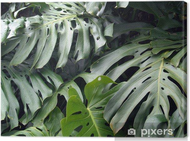 Obraz na płótnie Philodendron - Rośliny