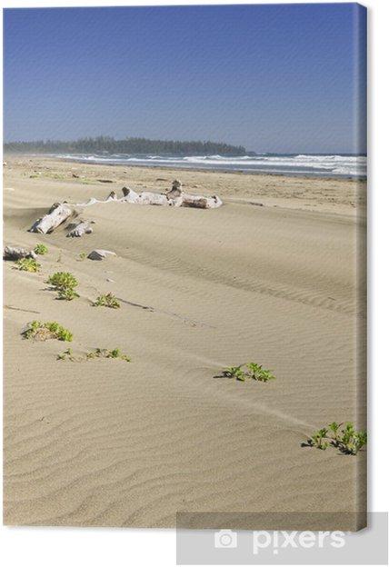 Obraz na płótnie Piaszczysta plaża na Oceanie Spokojnym w Kanadzie - Ameryka