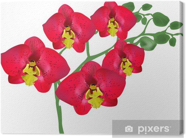 Obraz na płótnie Pięć łaciate jasne czerwone orchidee na gałęzi - Kwiaty