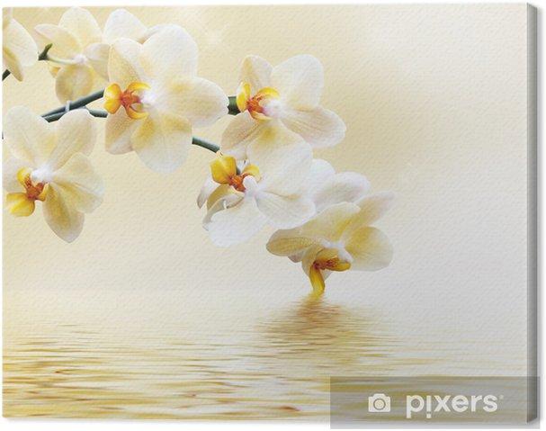 Obraz na płótnie Piękna biała orchidea -
