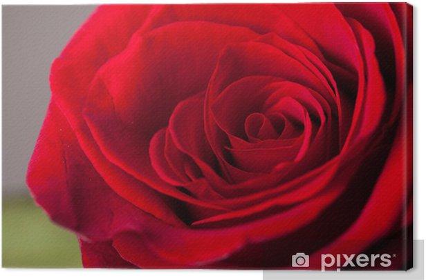 Obraz na płótnie Piękne bliska czerwona róża - Święta międzynarodowe