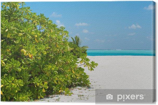 Obraz na płótnie Piękne drzewa na białym plaży i widok na ocean - Wyspy