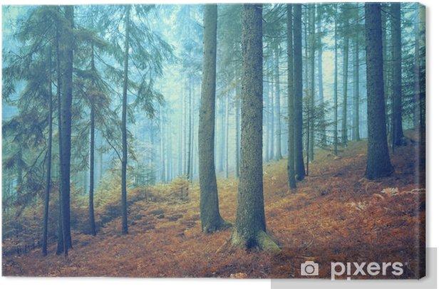 Obraz na płótnie Piękne marzycielski lasów iglastych. Efekt koloru filtr. - Krajobrazy