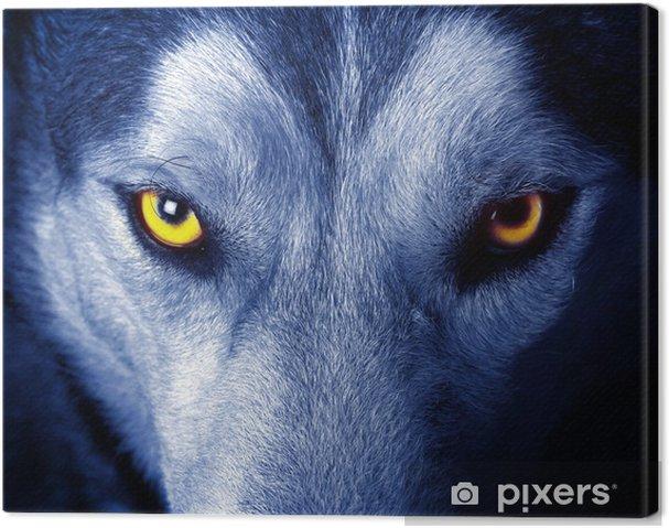 Obraz na płótnie Piękne oczy dzikiego wilka. - Tematy