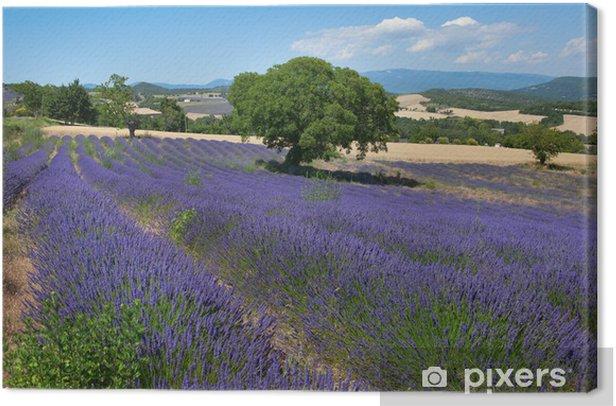 Obraz na płótnie Piękne pola lawendy we Francji - Tematy