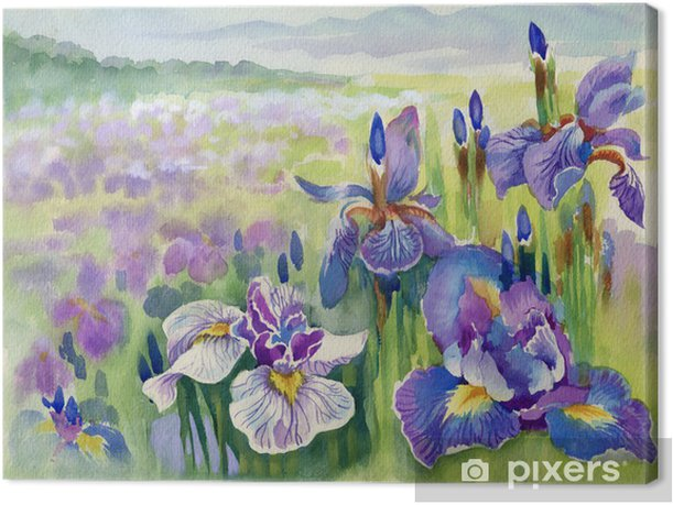 Obraz na płótnie Piękne tęczówki łąka w akwareli - Tematy