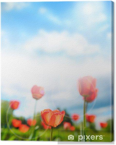 Obraz na płótnie Piękne tulipany przeciwko dramatycznego niebo - Krajobraz wiejski
