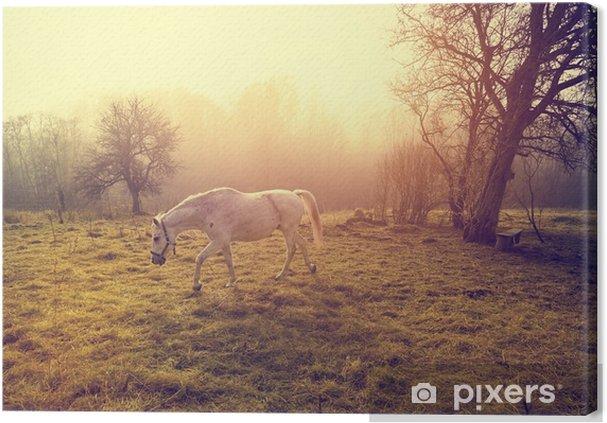 Obraz na płótnie Piękny biały koń - Zwierzęta