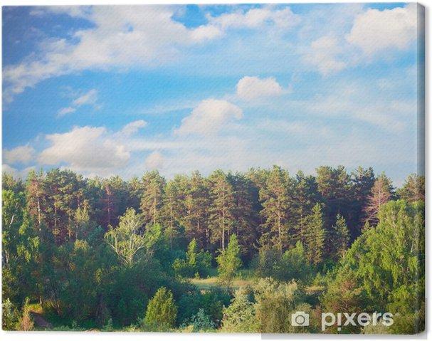 Obraz na płótnie Piękny krajobraz lato - Lasy