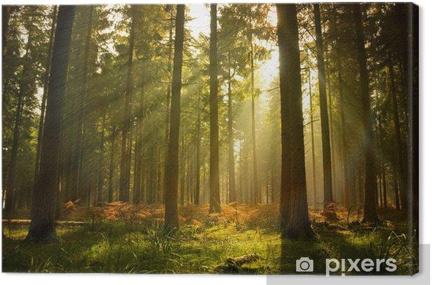 Obraz na płótnie Piękny las - Style