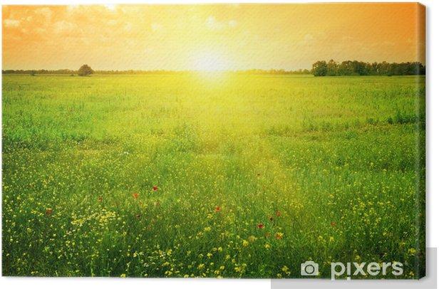 Obraz na płótnie Piękny zachód słońca na polu wiosny - Tematy