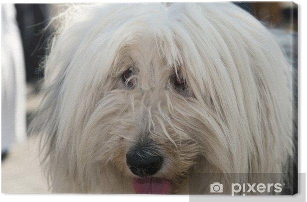 Obraz na płótnie Pies bloków katalońsku - Ssaki