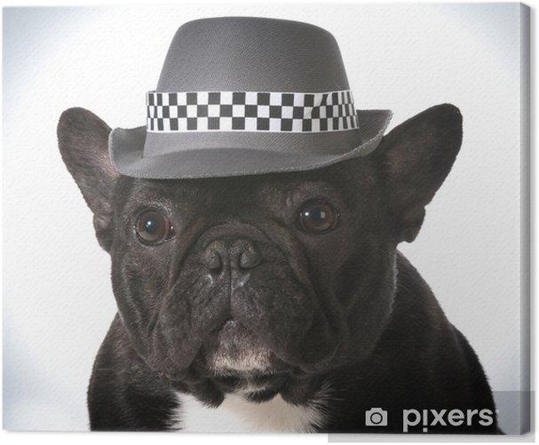 Obraz na płótnie Pies ma na sobie kapelusz - Buldogi francuskie