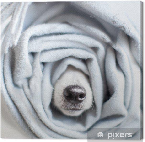 Obraz na płótnie Pies owinięty w szalik - Zwierzęta