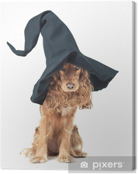 Obraz na płótnie Pies siedzi w czarownic kapelusz i wygląda imponująco - Święta międzynarodowe