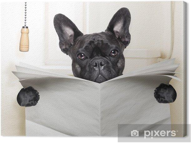Obraz na płótnie Pies WC - Buldogi francuskie