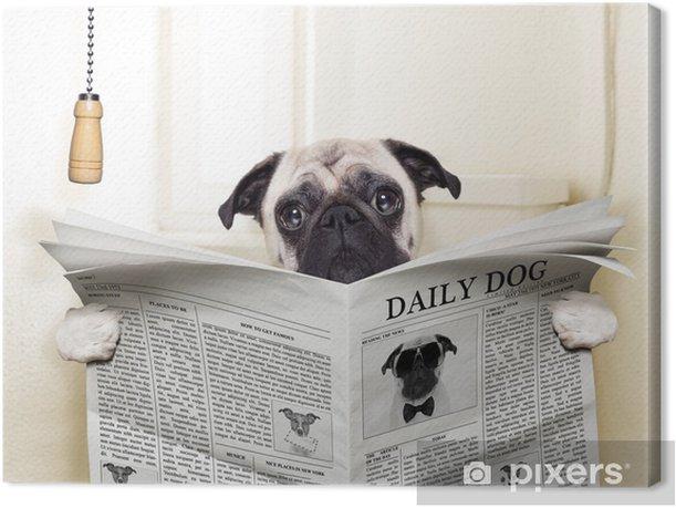 Obraz na płótnie Pies WC - Mopsy